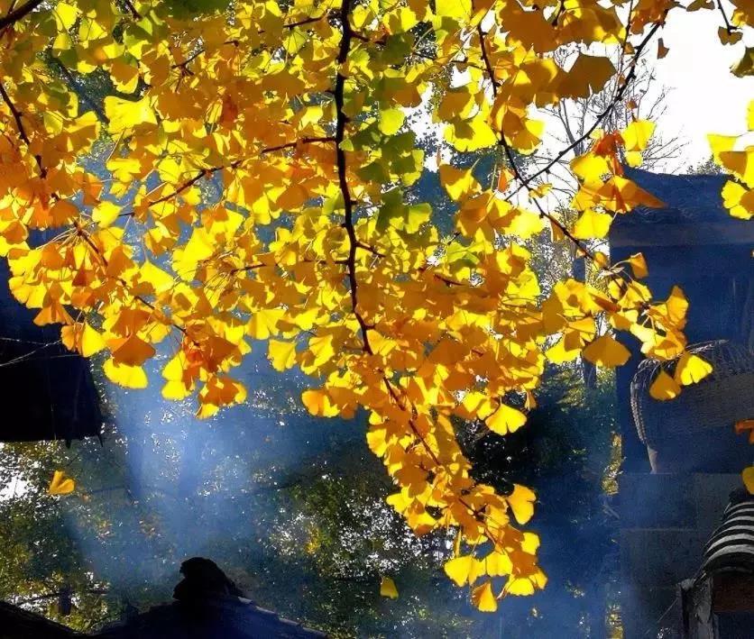 【优行·国旅】优行企业员工团建推荐第十三季---腾冲童话银杏村